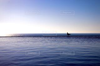 風景,海,空,かわいい,綺麗,青空,1羽の鳥,海の上を歩いてる