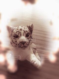 動物,小物,置物,可愛い,子,セピア,ホワイトタイガー,勇敢,強気,神聖な,神秘な