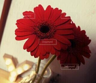 花,屋内,赤,部屋,生活,草木,ガーベラ