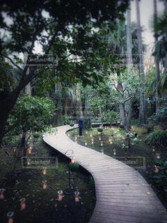 公園,屋外,水面,樹木,道