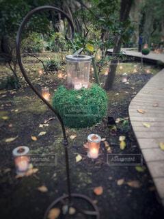 秋,屋外,樹木,キャンドル,植木鉢,地面,ガーデン