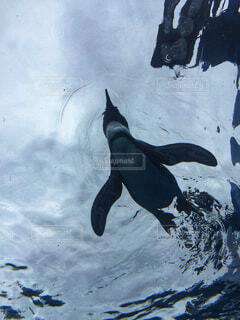 動物,鳥,魚,雪,屋外,ペンギン,海獣