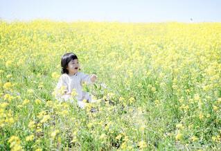 菜の花畑の写真・画像素材[4302713]