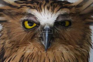 イケメンな鳥の写真・画像素材[4305534]