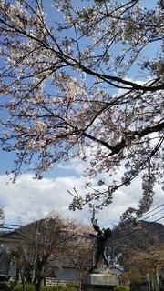 空,花,桜,屋外,雲,樹木,新緑,草木