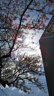 空,秋,雪,屋外,雲,樹木,桜吹雪