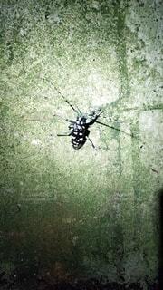動物,屋外,クモ,昆虫,カブトムシ
