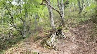 自然,風景,屋外,樹木,地面,汚れ,草木,パス