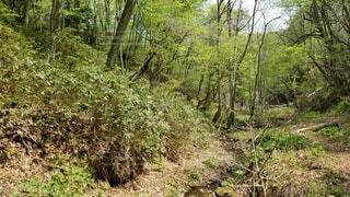 自然,風景,森林,屋外,草,樹木,ジャングル,草木,原生林,パス,自然保護区,ウッドランド