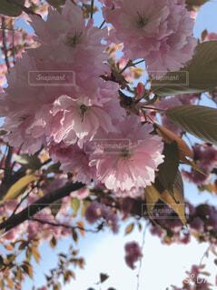 花,春,草木,ブルーム,ブロッサム