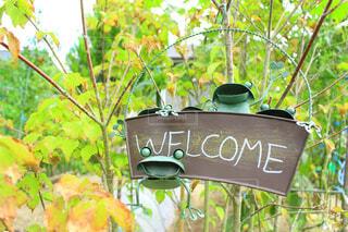 自然,緑,看板,樹木,可愛い,冒険,カエル,手書き,草木,漫画,おもてなし,ようこそ,ウェルカム,かえる,いらっしゃい