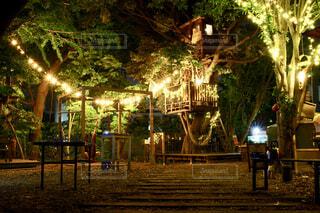 夜,屋外,樹木,ライトアップ,明るい,パーティー,草木,秘密基地,街路灯,ウッドハウス