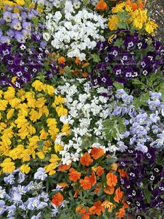 花,カラー,草木,ポット