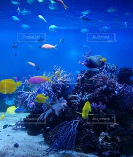 水族館のカラフルな魚たちの写真・画像素材[4305116]