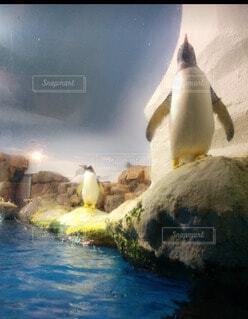 凛としたペンギンの写真・画像素材[4305114]