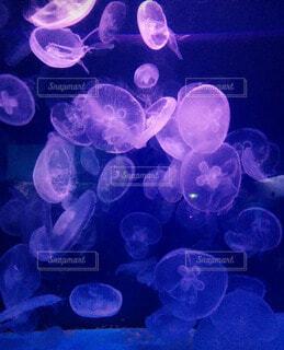 動物,水族館,葉,プランクトン,クラ ゲ,腔腸動物,刺胞動物,生物発光,海洋無脊椎動物