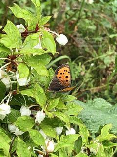 花,春,植物,蝶々