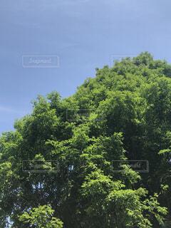 自然,空,森林,屋外,雲,樹木,草木