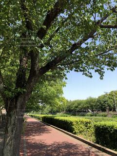 空,公園,屋外,樹木,草木,ガーデン