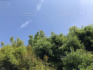 雲,青空,新緑