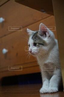 猫,動物,屋内,白,景色,オレンジ,床,子猫,ネコ科,探す