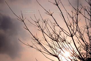 自然,空,屋外,雲,枝,樹木,草木,小枝