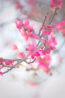 花,ピンク,花束,草木