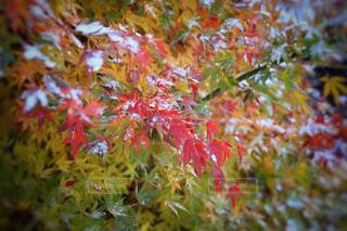 花,秋,屋外,葉,樹木,草木,カエデ