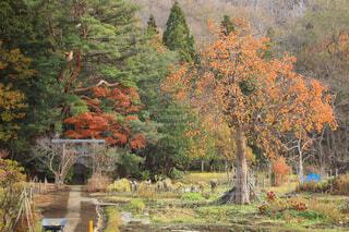 自然,風景,秋,森林,木,屋外,草,樹木,落葉