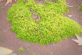 屋外,地面,草木