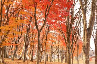 木のクローズアップの写真・画像素材[4337079]