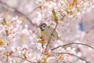 食べ物,花,動物,鳥,屋外,スズメ