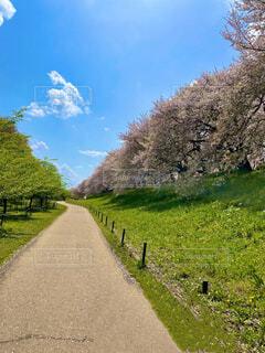 自然,風景,空,花,春,桜,屋外,雲,草,樹木
