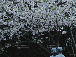 花,春,屋外,樹木,草木,ガーデン,ブルーム