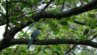 動物,鳥,屋外,樹木,座る,腰掛け,支店