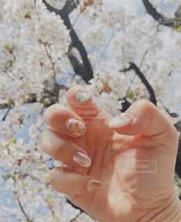 春ネイルの写真・画像素材[4306370]