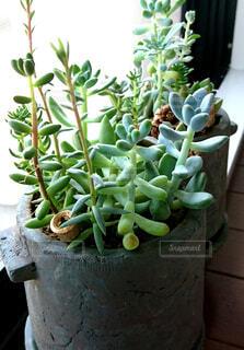 自然,緑,植木鉢,窓辺,癒し,サボテン,観葉植物,多肉植物,草木,シズル,ボタニカル,黄緑,ポット,ガーデン,フローラ
