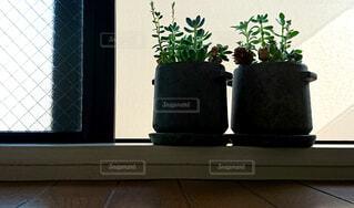屋内,窓,シルエット,植木鉢,逆光,窓辺,観葉植物,フローリング,多肉植物,ボタニカル,ポット