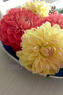 花,屋内,赤,黄色,バラ,花びら,テーブル,草木,菊,花のクローズアップ