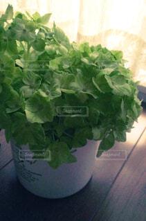屋内,緑,植物,花瓶,葉,床,窓辺,観葉植物,懐かしい,思い出,フローリング,草木,ボタニカル,黄緑,フローラ,窓辺の光