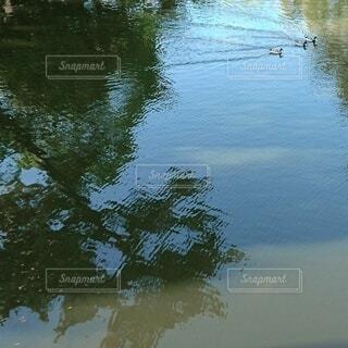 自然,鳥,屋外,水面,池,シルエット,樹木,鴨,泳ぐ鳥,水面に映る影