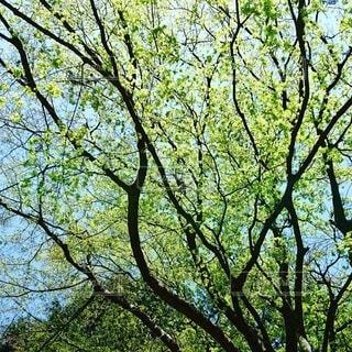 自然,屋外,きれい,葉,樹木,新緑,初夏,草木,日中,黄緑色