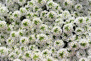 可愛らしいお花に囲まれての写真・画像素材[4306515]
