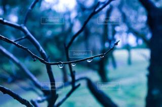 雨の日の写真・画像素材[4311982]