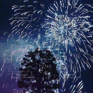 自然,空,夜,夜景,木,屋外,花火,樹木,打ち上げ花火,景観