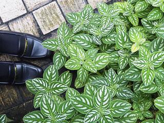 自然,緑,植物,足元,葉,草木