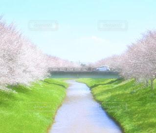 空,花,春,桜,花畑,屋外,ピンク,緑,植物,カラフル,きれい,綺麗,桜並木,花びら,鮮やか,サクラ,草,樹木,自動車,桃色,草木,4月,さくら,ブルーム,満開の桜