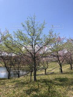 空,花,春,屋外,景色,草,樹木,草木