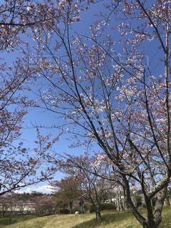 空,花,屋外,樹木,草木,支店