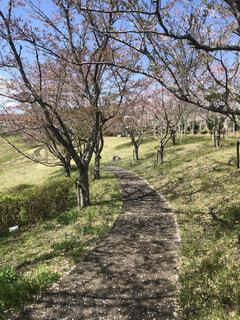 風景,空,公園,花,春,屋外,草,樹木